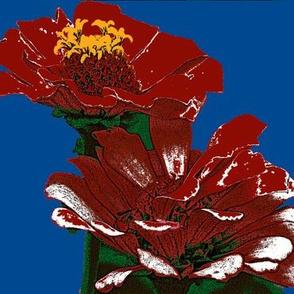 zinnias, red,