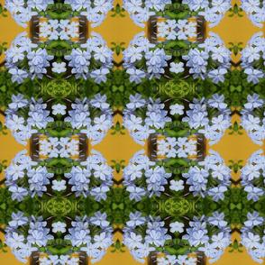 Blue Blossoms_0418