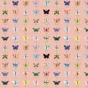 Rrsmall_butterfly_peach_shop_thumb