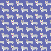 grey corgis on lavender blue_©Solvejg Makaretz