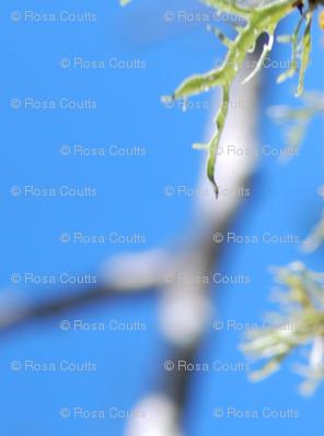 sparkley lichen-blue sky
