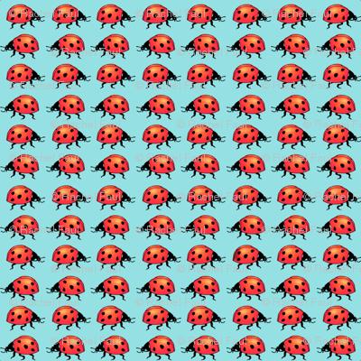 ladybugs_medaqua