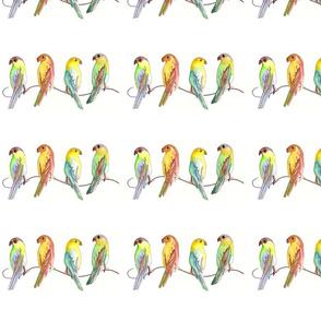 birdsonawire2012