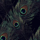 The Fabulous Peacock Black Diamond