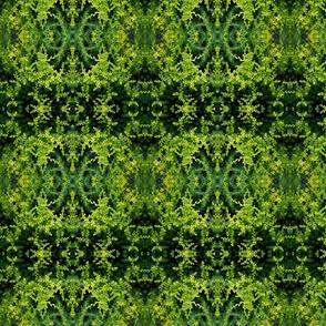 Tiny Green Sedum_8257
