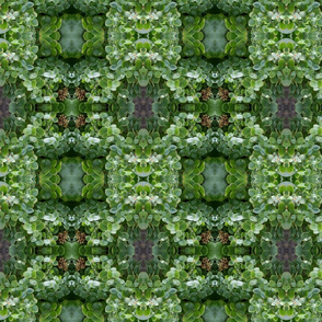 Green Succulents_0377