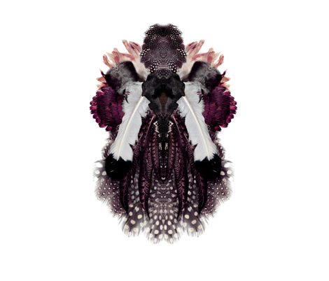 Ornithology of Interest fabric by milk_milk_lemonade on Spoonflower - custom fabric