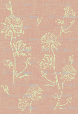 Chicory in Vintage Pink