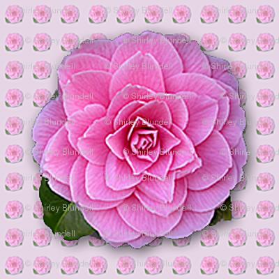 Camellia-pattern