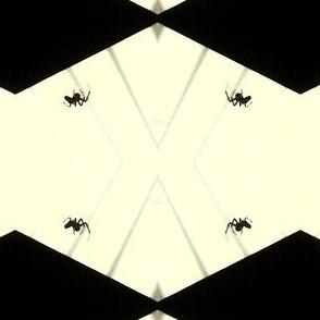 Black Diamond Spiders