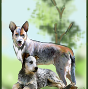Cattle dog fabric