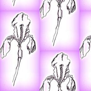 iris2-purple edge