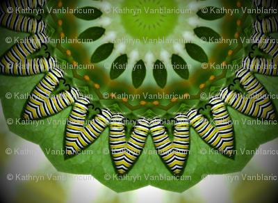 caterpillarkaleidoscope_1