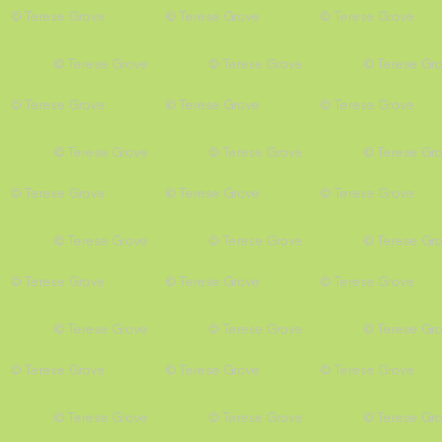 Animal Trail Lime