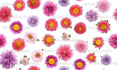 chrysanthemum ditsy