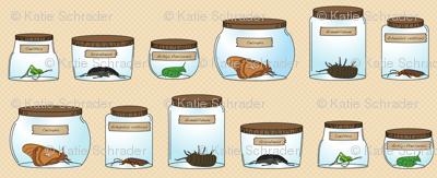 Amateur Entomologist