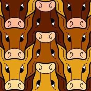 cow/calf head 3
