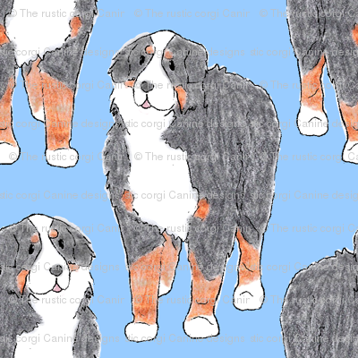 Standing Bernese mountain dog sketch - blue