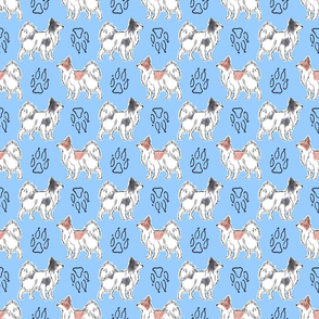 Posing Papillons and paw prints - blue