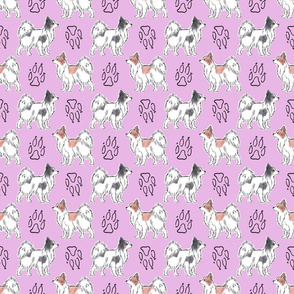 Posing Papillons and paw prints - pink