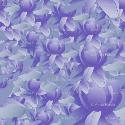 lotus blooms in purple