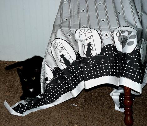 Black Cat Strut - Border Print