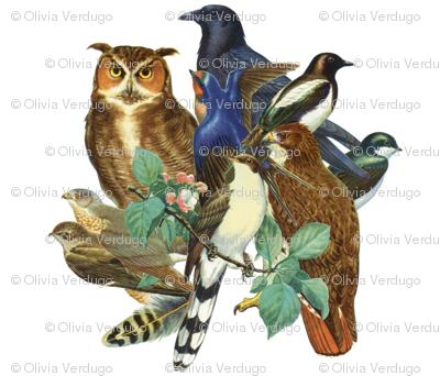 birds_collage2
