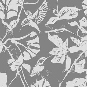 Kingfisher_greys___whites