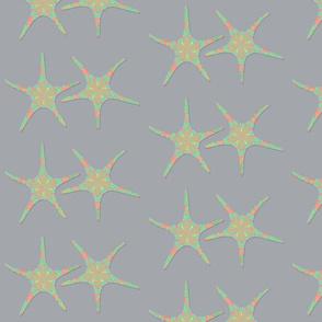 starfish gray background 1