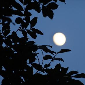 moonlightblue