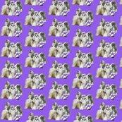 Rrrrshihtzusbest_in_violet_shop_thumb