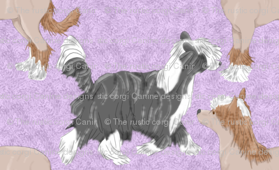 Chinese crested puppies - purple