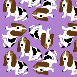 Basset Hound on Purple