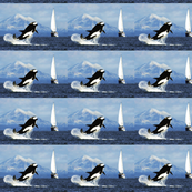 Orca-Breaching