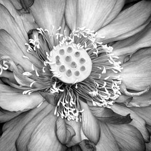 Black & White Lotus