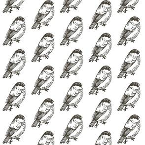 Bullfinch_b_w01