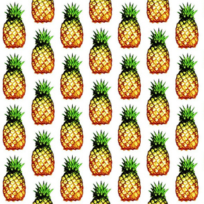 field of pineapples