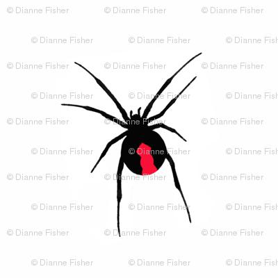 Redback Spider on White