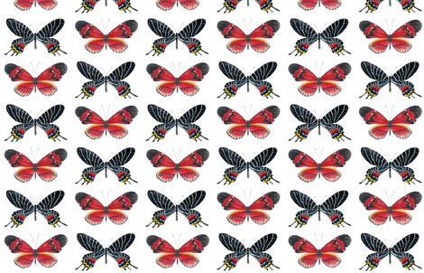 Rrred_and_black_butterfly_wallpaper_copy_shop_preview
