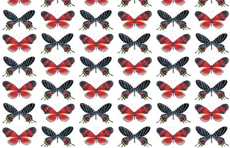 "Red ""Postman"" Butterfly fabric by angelaanderson on Spoonflower - custom fabric"