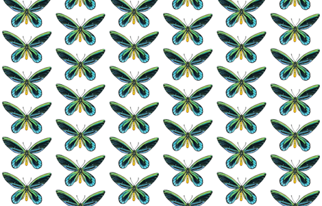 Birdwing Butterfly fabric by angelaanderson on Spoonflower - custom fabric