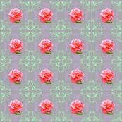 Framed_rose_2