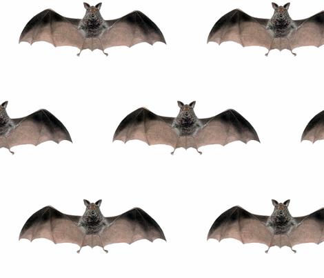 Crazy Bat-large fabric by susaninparis on Spoonflower - custom fabric