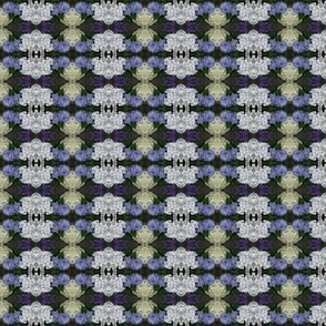 IMG_1990 Hydrangeas