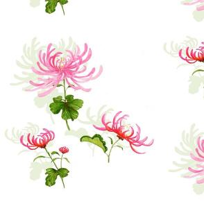 spidermumsingle