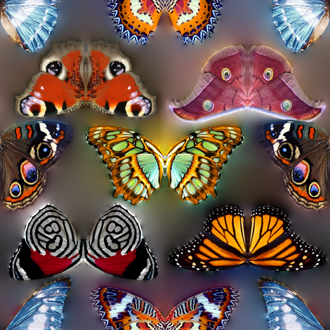 Butterflies Invasion fabric by bonnie_phantasm on Spoonflower - custom fabric