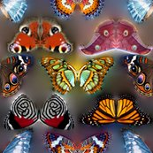 Rbutterflies_300_8x8_1_shop_thumb
