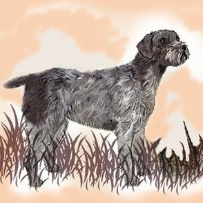 German Wirehaired Pointer in the grass