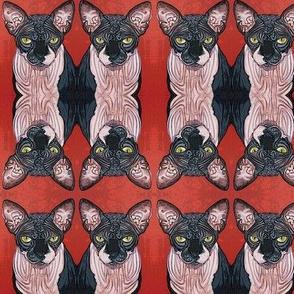 Boris Sphynx Cat