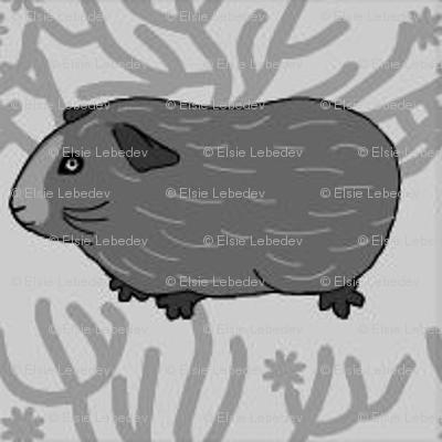 Guinea pig & a bush